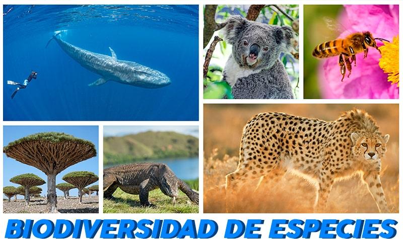 biodiversidad de especies